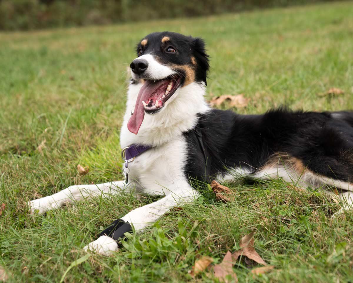 Happy dog wearing Wrist Wrap