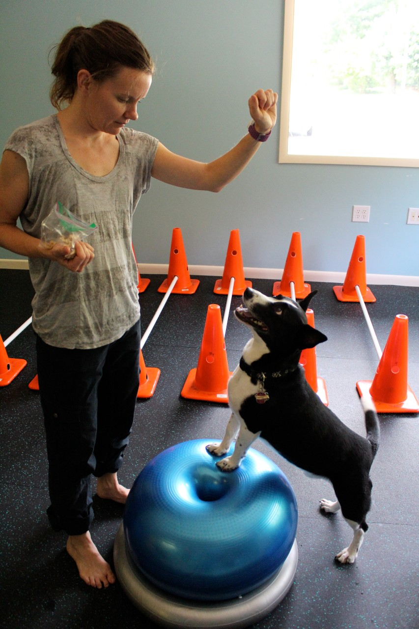 Physical therapy for dogs in action.