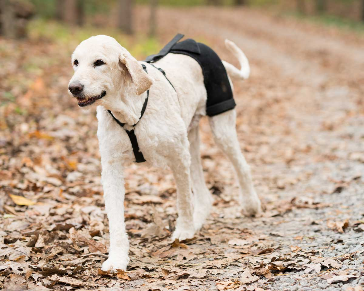 hip hound dog hip brace for hip dysplasia