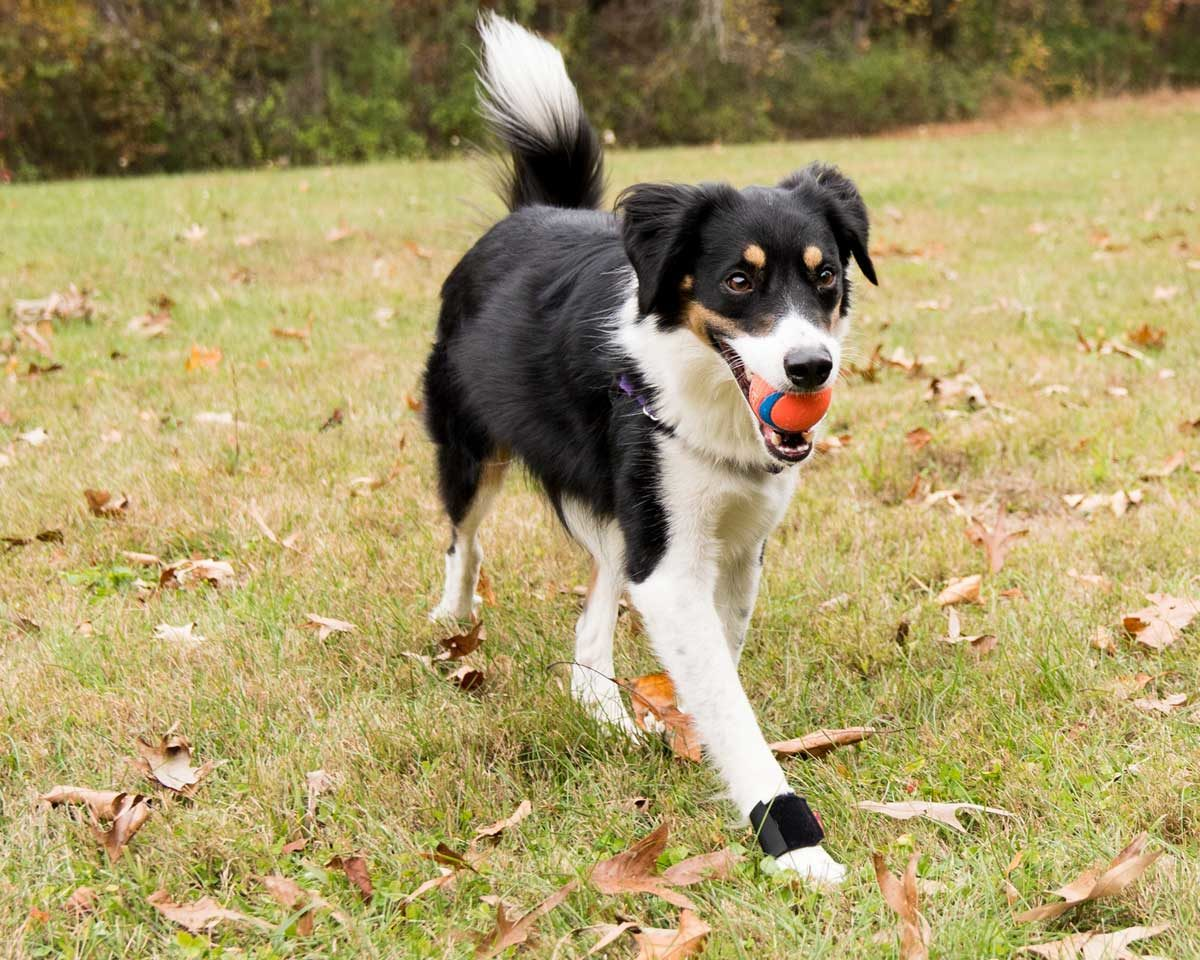 Wrist Brace Ortho Dog Wrist Wrap